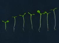 Image result for radiation on plants