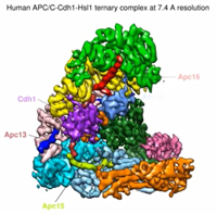 Protein structure revealed
