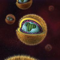 herpes virus liquid DNA