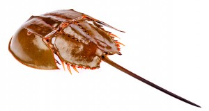 Endotoxins provoke the intravascular clotting of horseshoe crab blood. More recently, recombinant DNA technology has enabled the development of alternative assays that are not reliant on this marine arthropod.