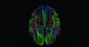 The shape of the cerebral cortex correlates with genetic ancestry.