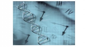 Just one night of sleep loss can alter the regulation and activity of clock genes.