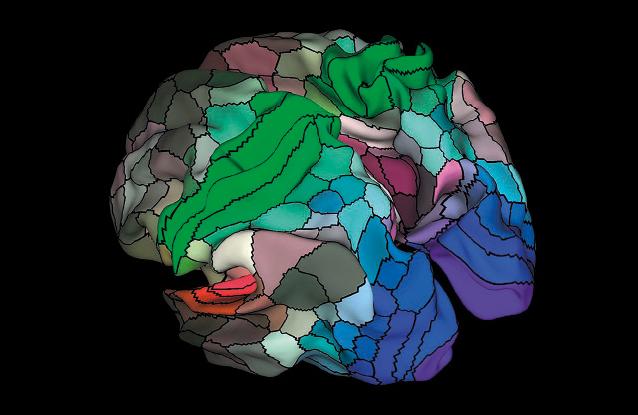The new brain map is based on large scale MRI studies.  Credit: Matthew F. Glasser, David C. Van Essen